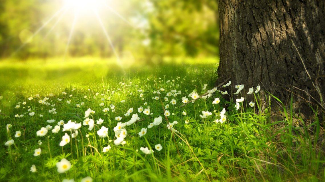 Baumstamm auf Wiese mit Blumen